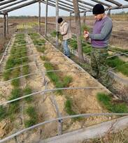 Лесники и экологи посадили саженцы сосны на площади три га – Минприроды