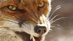 LPR completes oral rabies vaccination of wildlife