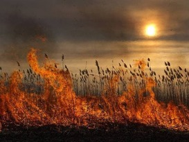 МЧС объявило с 11 сентября в ЛНР высокий класс пожарной опасности