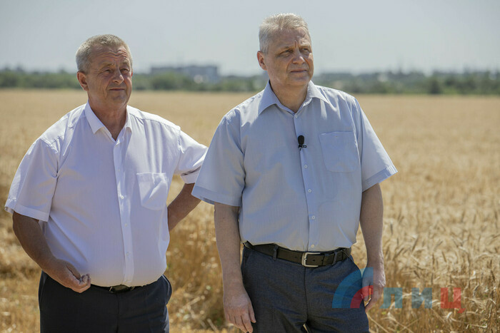 Начало уборки озимой пшеницы, Лутугинский район, 13 июля 2021 года