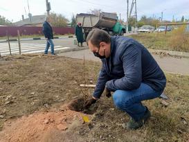 Жители Перевальска высадили в городе новый липовый парк