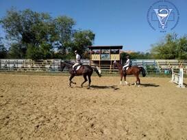 Соревнования по конному спорту собрали в Луганске 15 спортсменов - ГСВМ