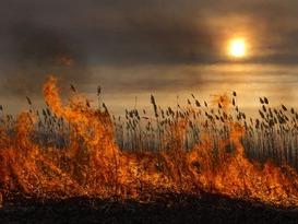 МЧС объявило с 23 июня в ЛНР высокий класс пожарной опасности